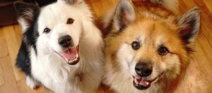 Koiran-märkäkohtu