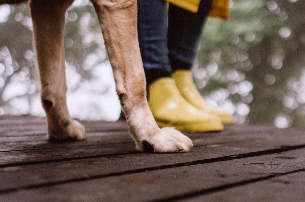 Nivelrikko koiralla