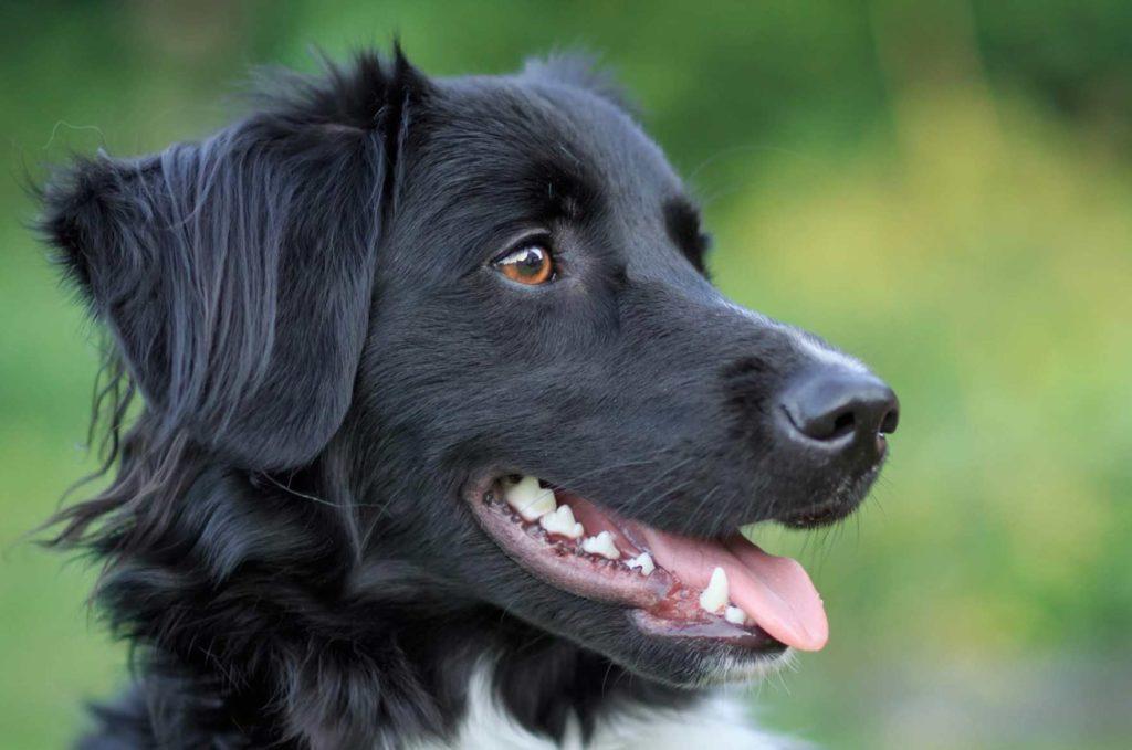 koiran-hampaat