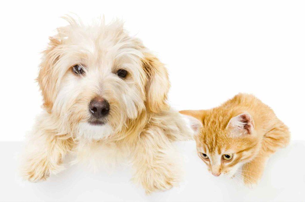 anaalirauhaset koiralla ja kissalla