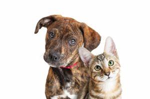 koiran ja kissan oksennuttaminen