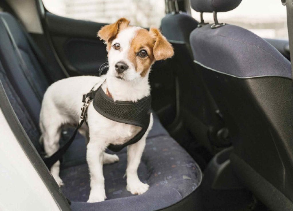 lämpöhalvaus vaanii koiraa autossa